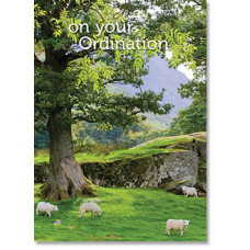 On Your Ordination Card Lambs