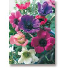 Mini Gift Card Anenomes
