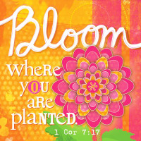 Canvas Magnet Bloom Where You Are Planted