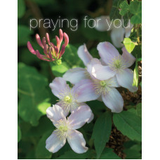 Praying For You Small Card Honeysuckle