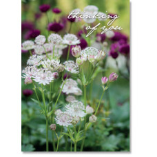 Thinking Of You Astrantia Flowers Greetings Card
